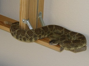 rattler-in-home